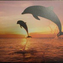 Delphine auf Urlaub